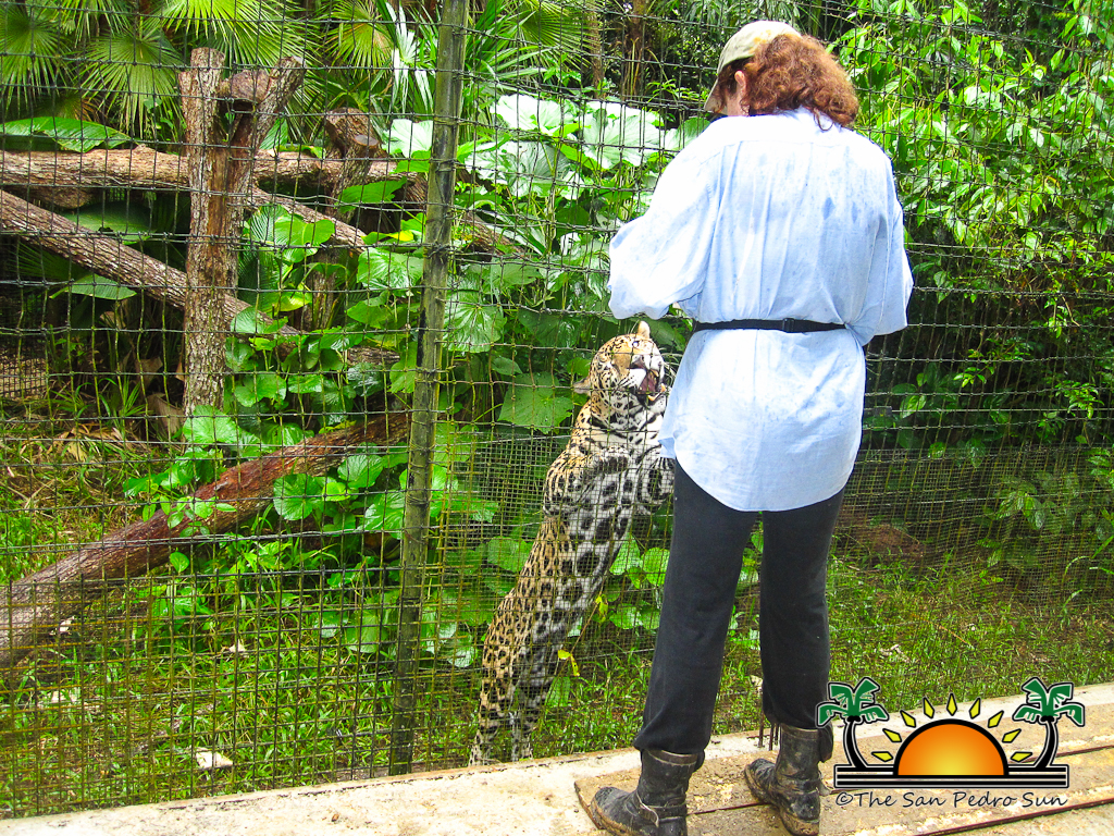 The Belize Zoo The Best Little Zoo In The World Indeed My - The 12 best zoos in the world