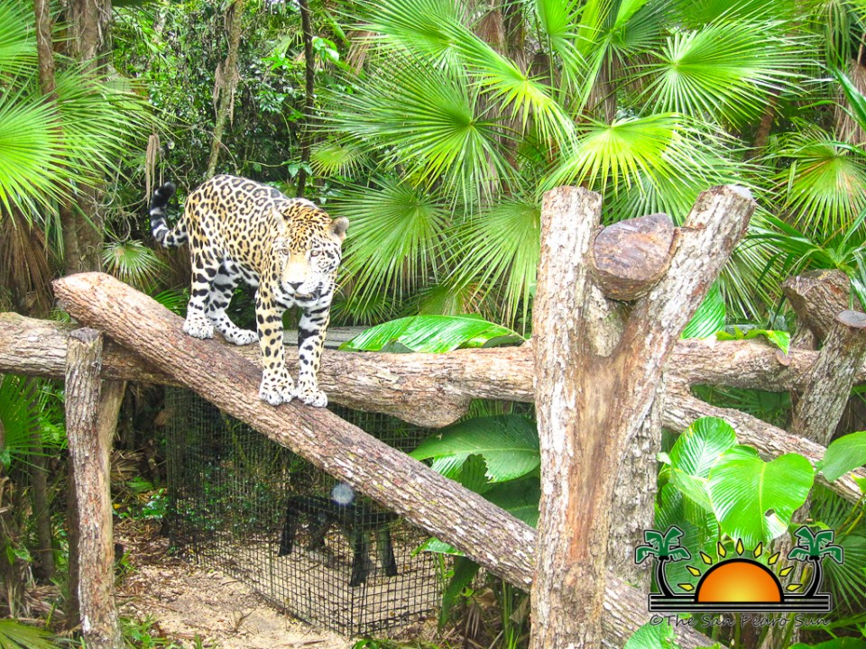 The-Belize-Zoo-15