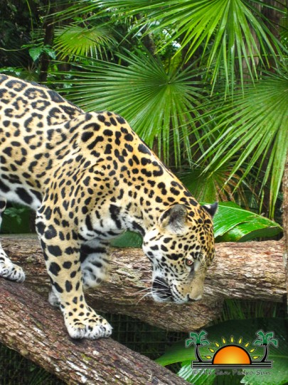 The-Belize-Zoo-16