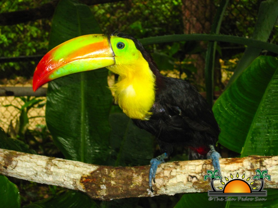 The-Belize-Zoo-17