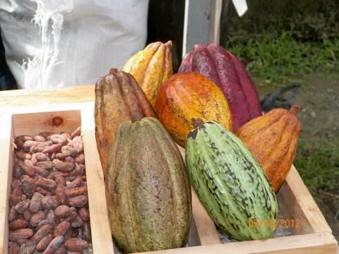 Toledo Cacao Festival 121