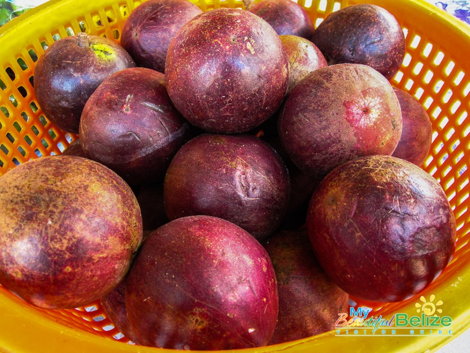 Belize Fruit Caimito-1