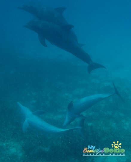 Dolphins at Play-2