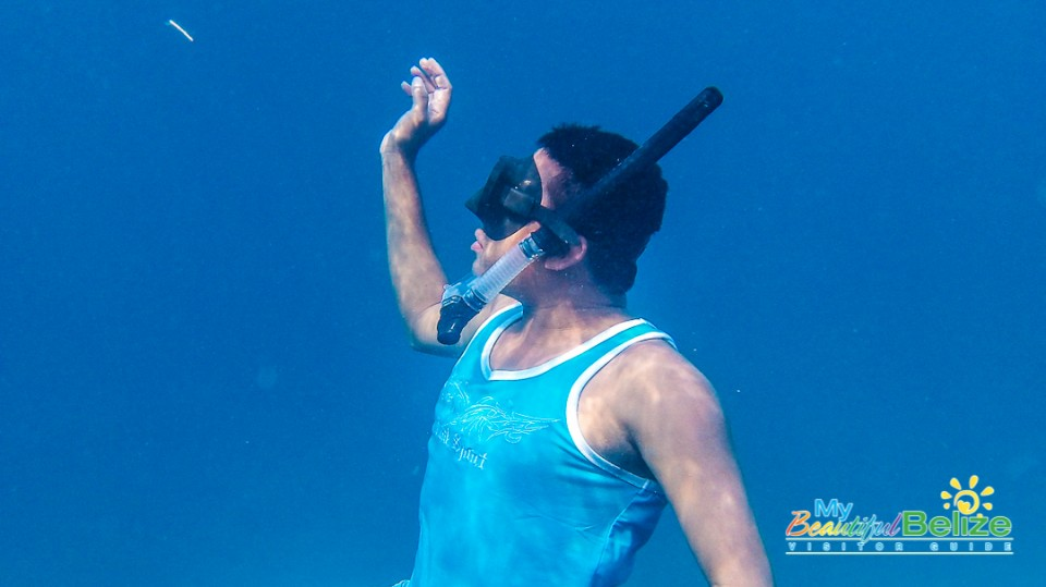 Elusive Whale Shark Dive-8