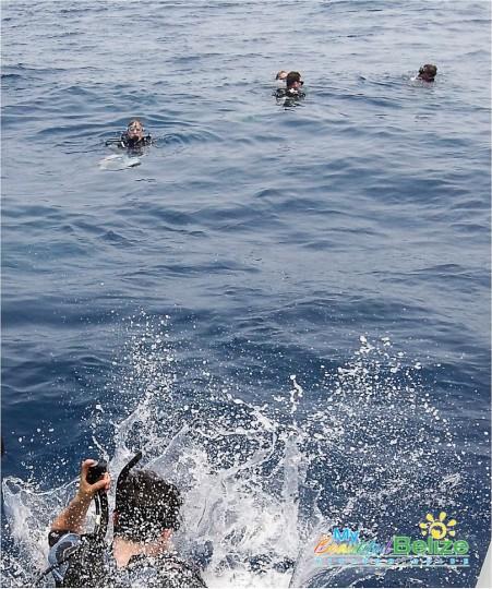Elusive Whale Shark Dive-9