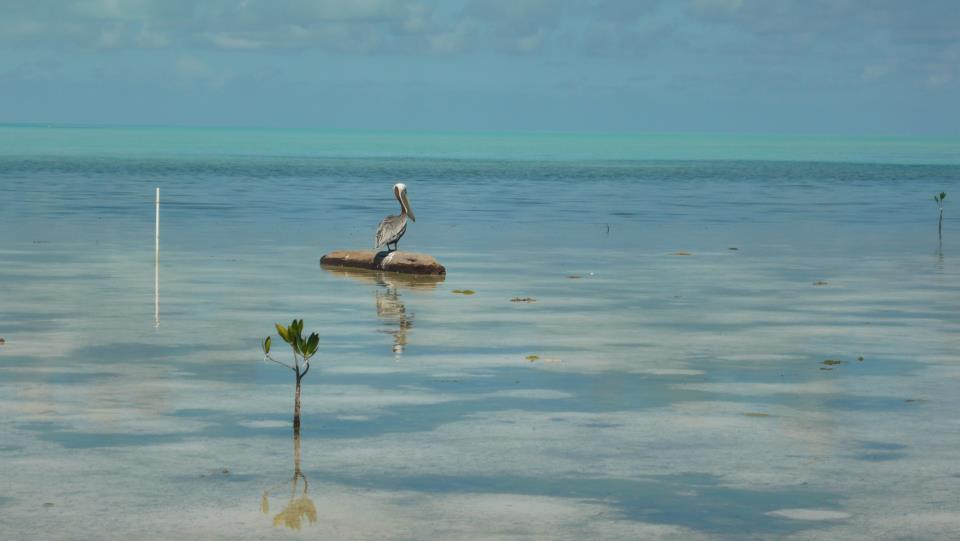 Flipkey recognizes belize among top 10 best eco vacation for 10 best vacation spots in the world
