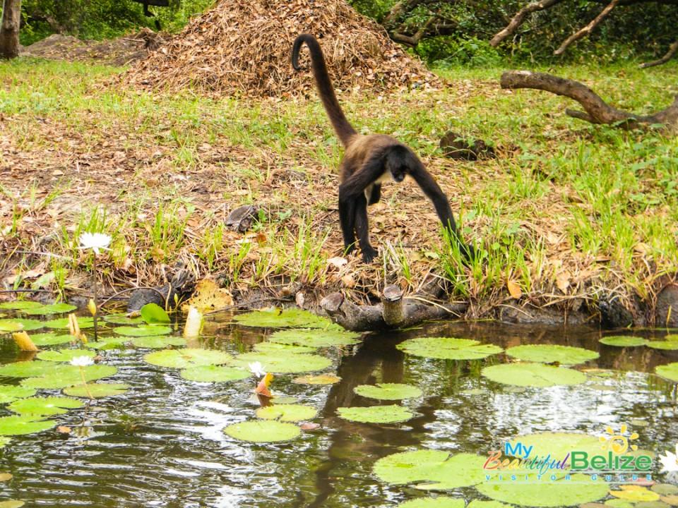 New River Lamanai Story-3