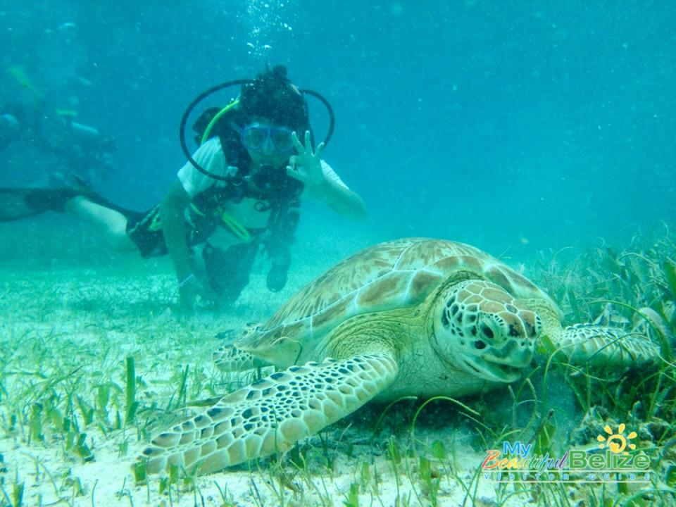 Reef Adventure Belize-10
