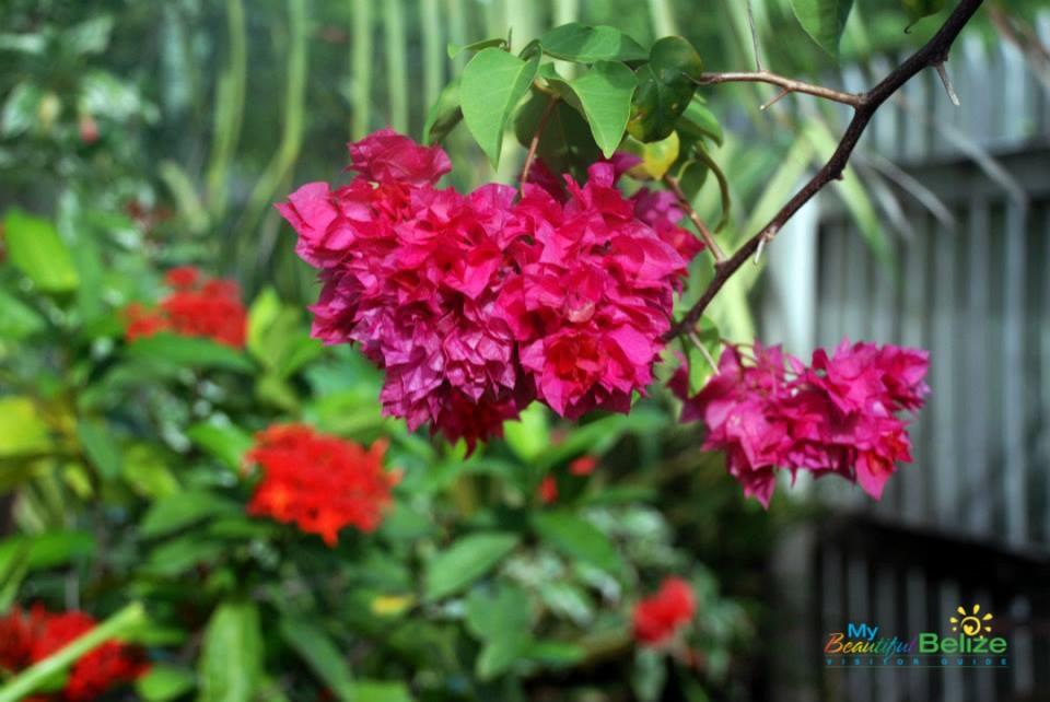 Backyard Beauties-4