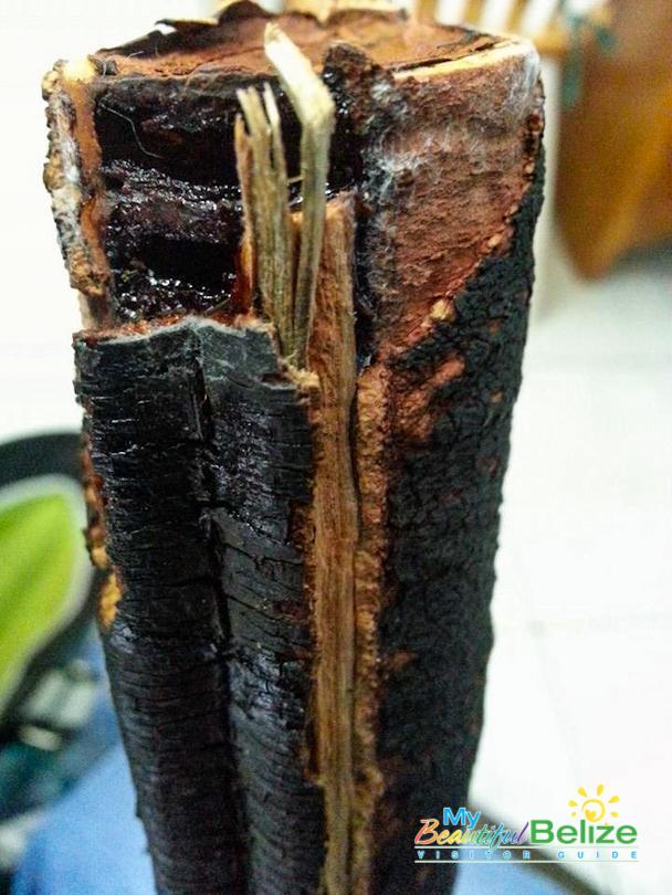 Bukut Cassia Grandis Stinking Toe-1