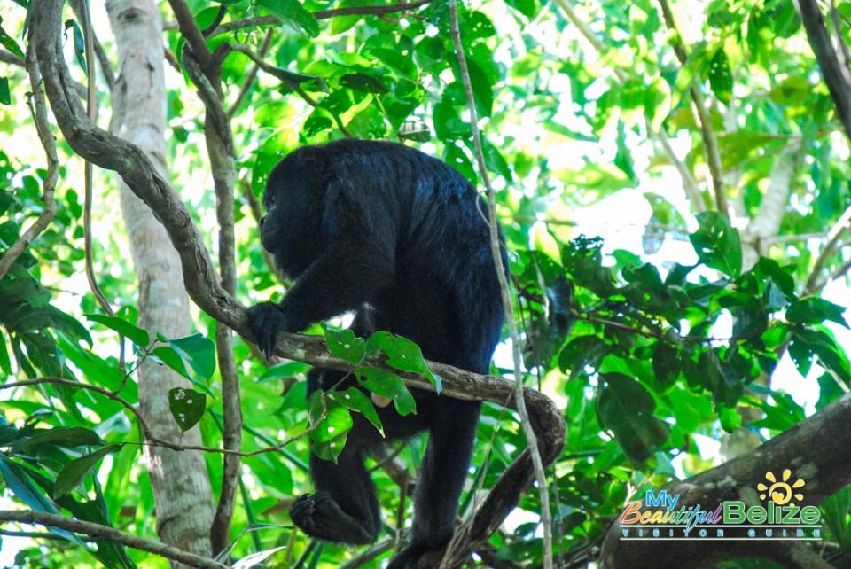 Backroads Belize Village Explore Howler Monkey Resort-8