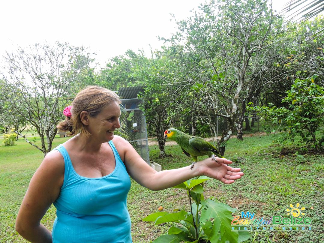 Belize Bird Rescue Parrot Bird Sanctuary-1