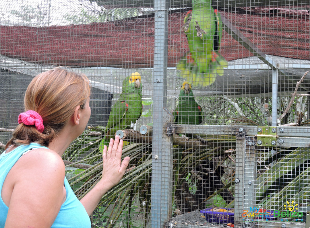 Belize Bird Rescue Avian Rehabilitation Centre & Bird