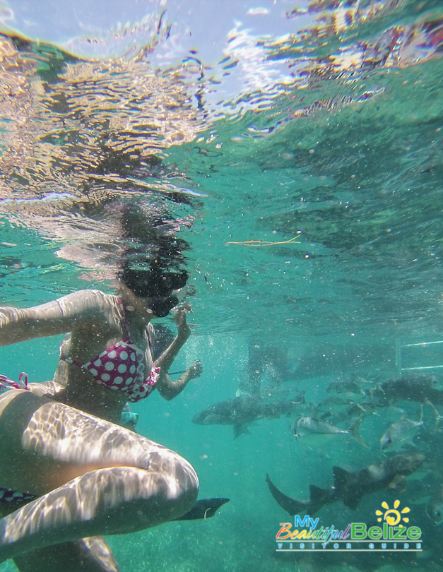 Reina de La Costa Maya 2014-15, Elisa Gomez, swims with the sharks!