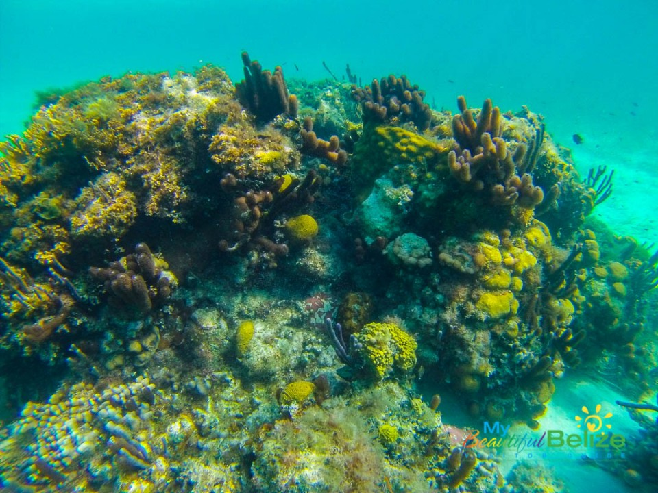Exploring the Jewel: Glover's Reef Atoll - My Beautiful Belize