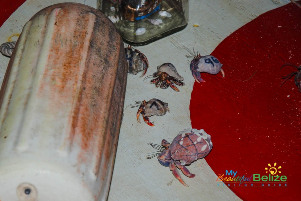 Crazy Canuck's Hermit Crab Race-13
