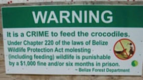 dont-feed-the-crocs