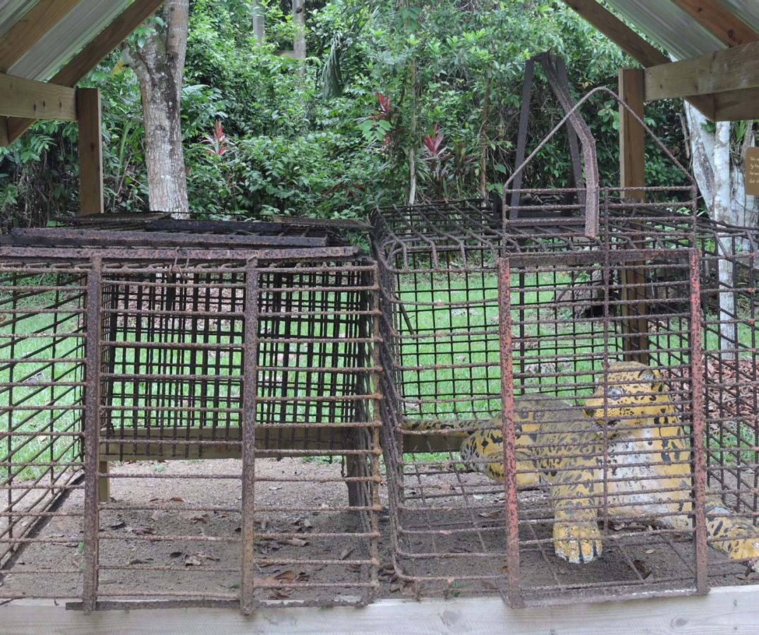 Cockscomb Jaguar Preserve jaguar traps
