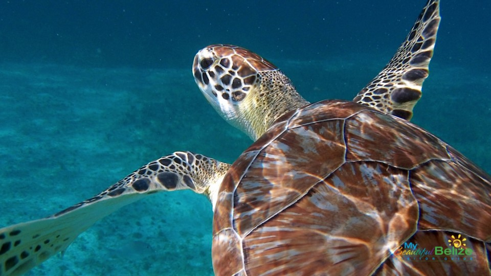 Meso-American Barrier Reef-10