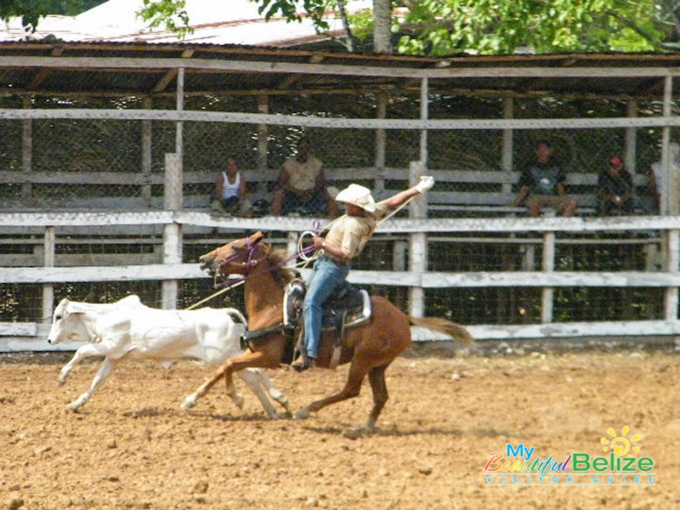 Go Cowboy!