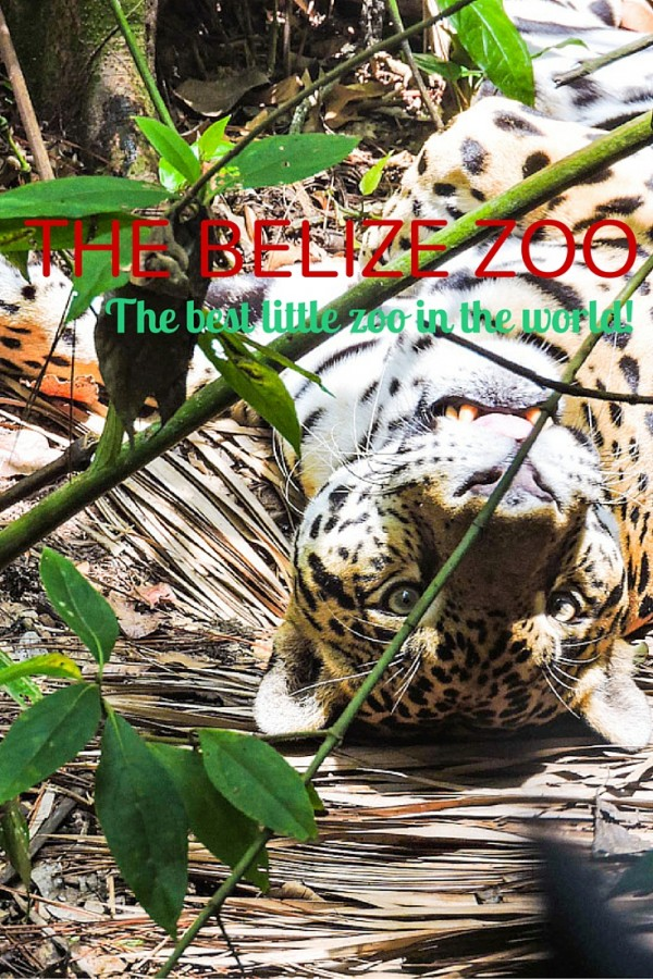The Belize Zoo Pinterest