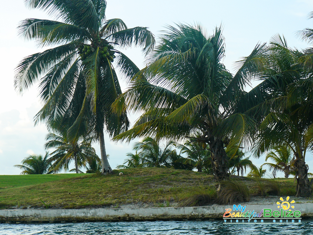 Coconut trees are abundant in this tiny island