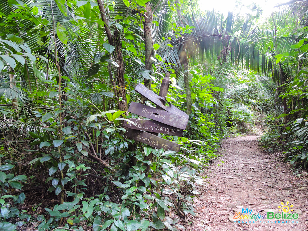 Guanacaste National Park  U2013 Jungle Exploring Done Easy